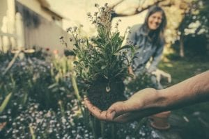 Gartenbewässerung Bepflanzung