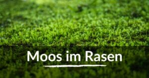 Read more about the article Moos