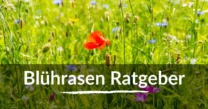 Read more about the article Blührasen Ratgeber