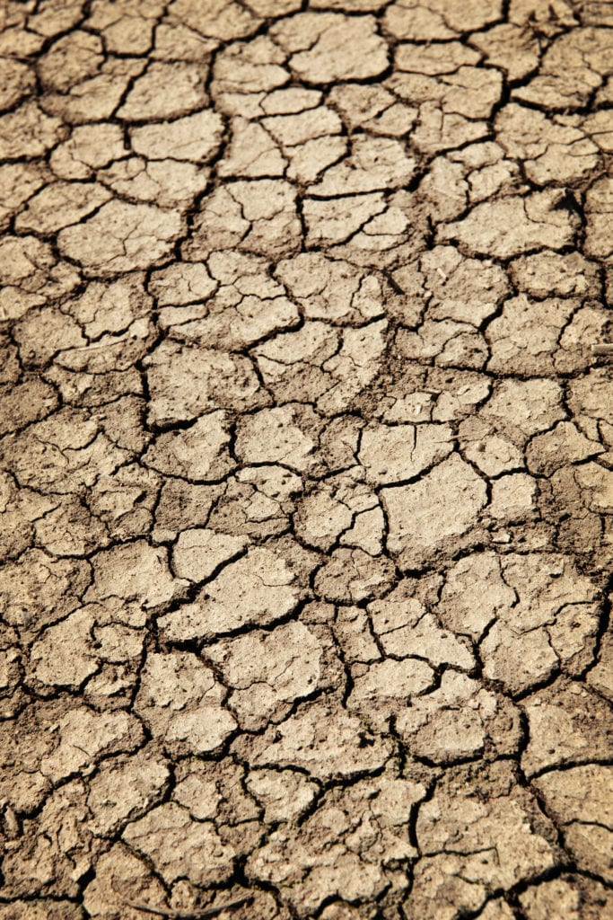 Rasenmähen bei Hitze und Trockenheit