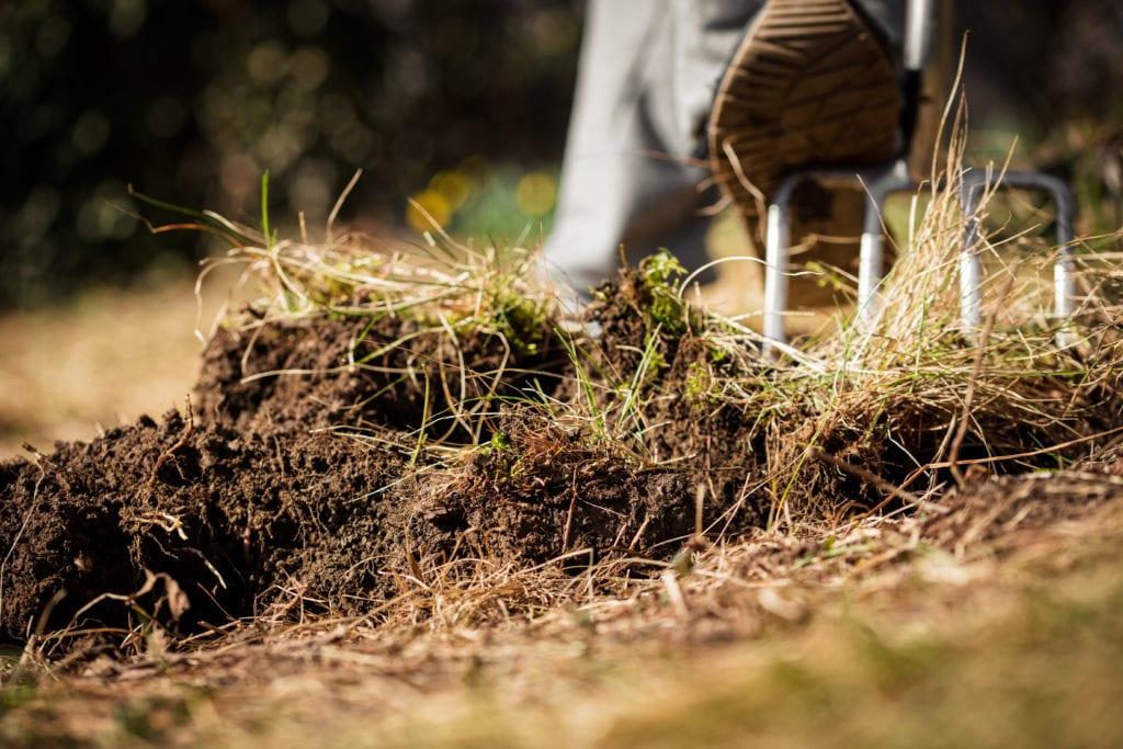 Giersch ausgraben