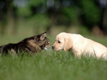 Tiere auf Rasen