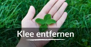 Read more about the article Klee entfernen