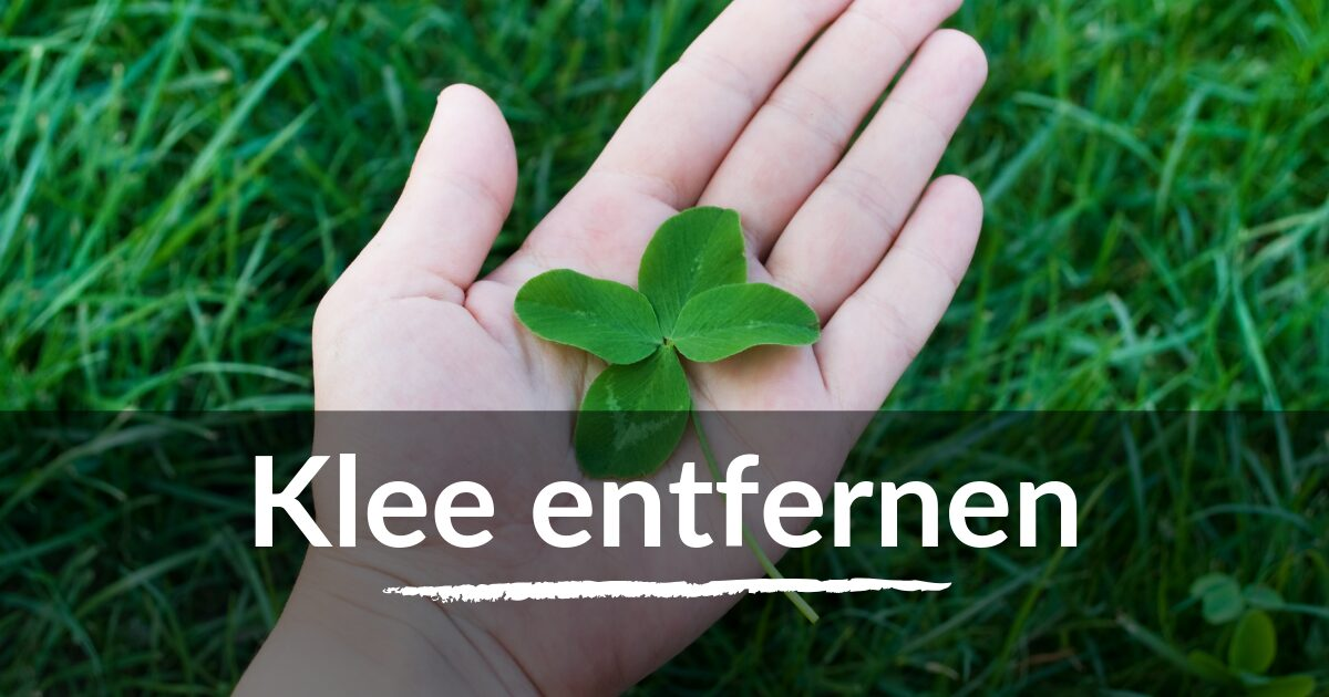 You are currently viewing Klee entfernen