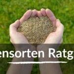 Rasensorten – Welcher Rasen passt zu Dir?