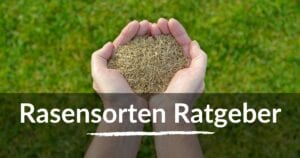Read more about the article Rasensorten – Welcher Rasen passt zu Dir?