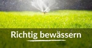 Richtig Rasen bewässern