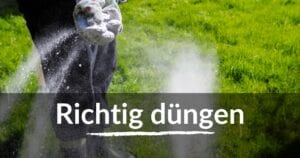 Read more about the article Rasen düngen