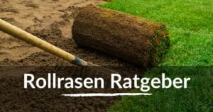 Read more about the article Rollrasen Ratgeber