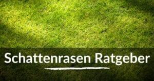 Read more about the article Schattenrasen Ratgeber – die besten Tipps für Aussaat und Pflege