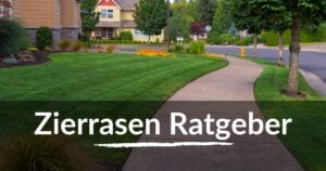 Read more about the article Zierrasen Ratgeber