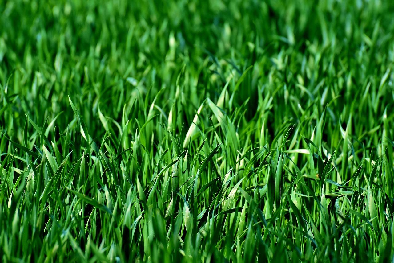 Perfekter Rasen