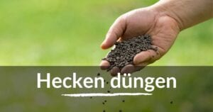 Read more about the article Hecken düngen
