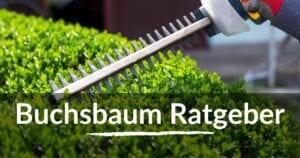 Read more about the article Buchsbaum Ratgeber