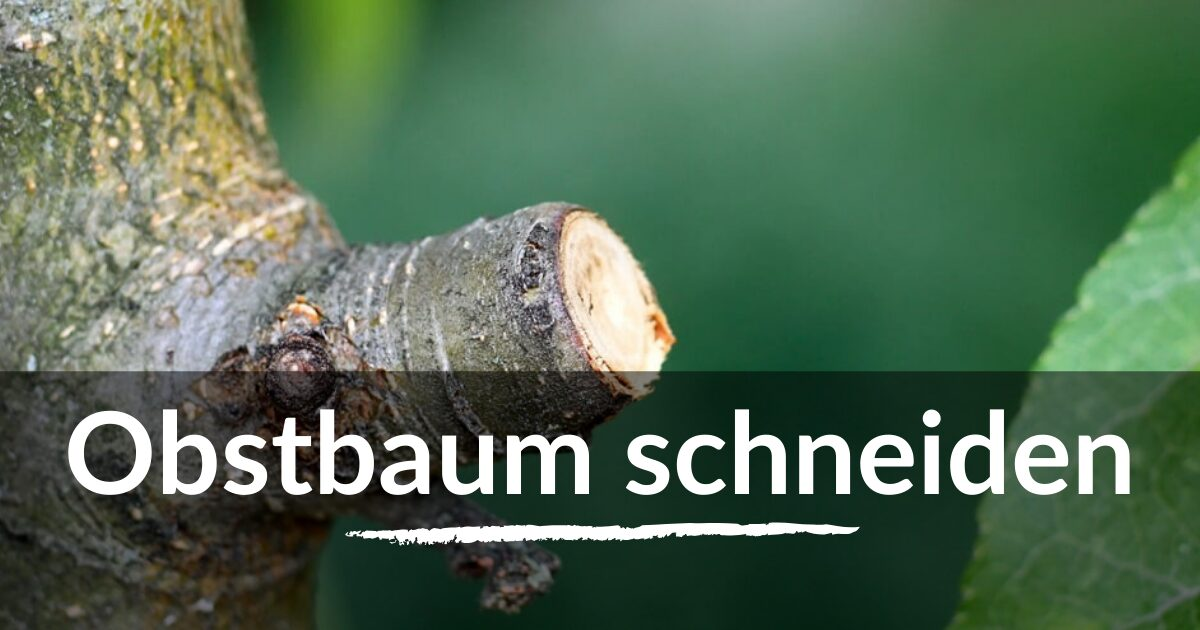 You are currently viewing Obstbaum schneiden