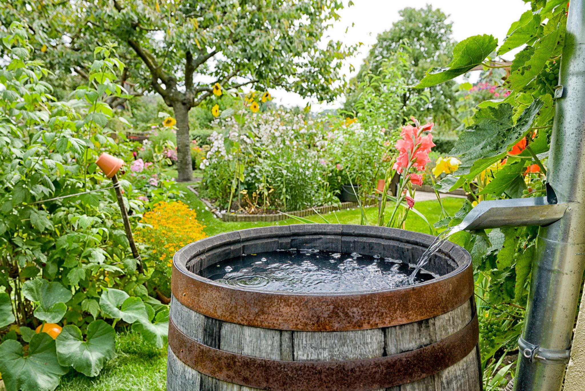 Gartenbewässerung Regentonne