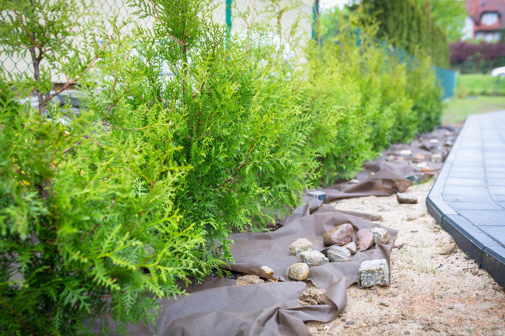 Hecken pflanzen Nachbar