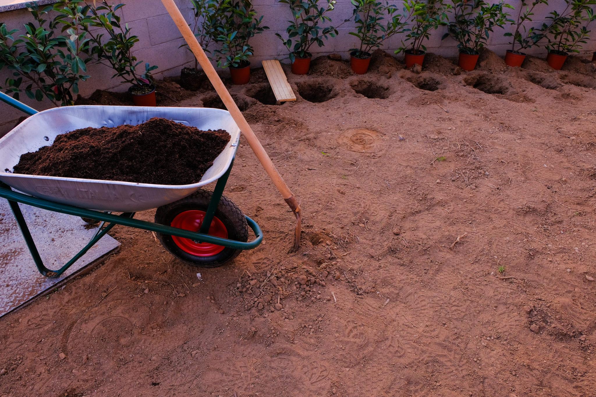 Hecke pflanzen Boden vorbereiten