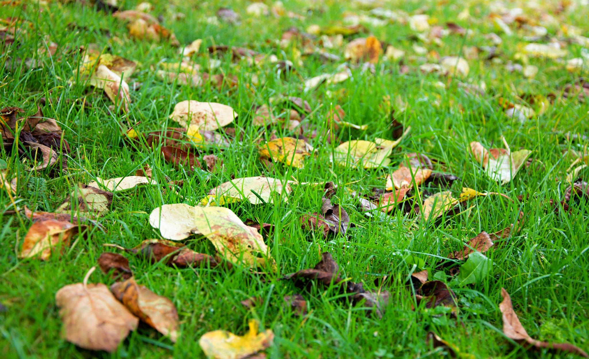 Laub entfernen Rasen