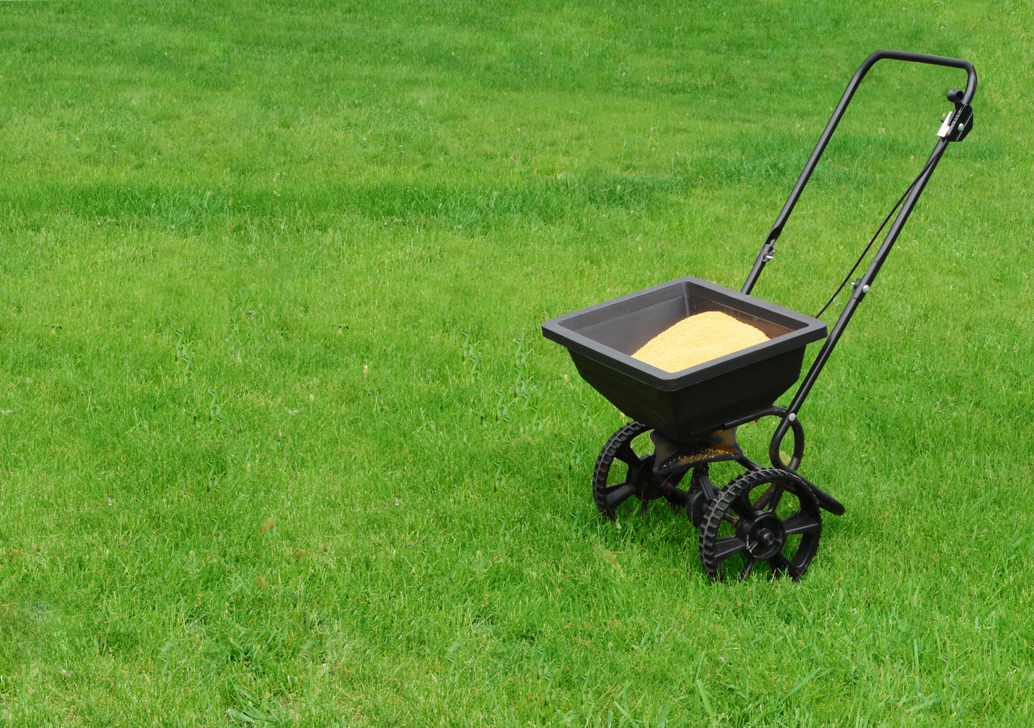 Rasen düngen richtige Menge